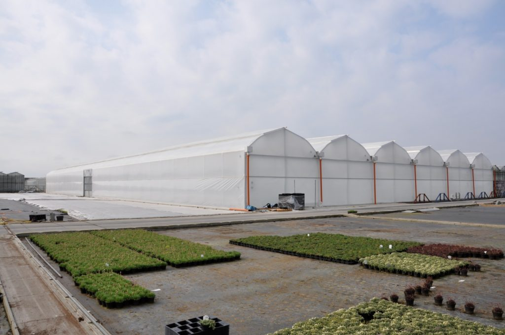 Solarii profesionale pentru legume sau flori 2