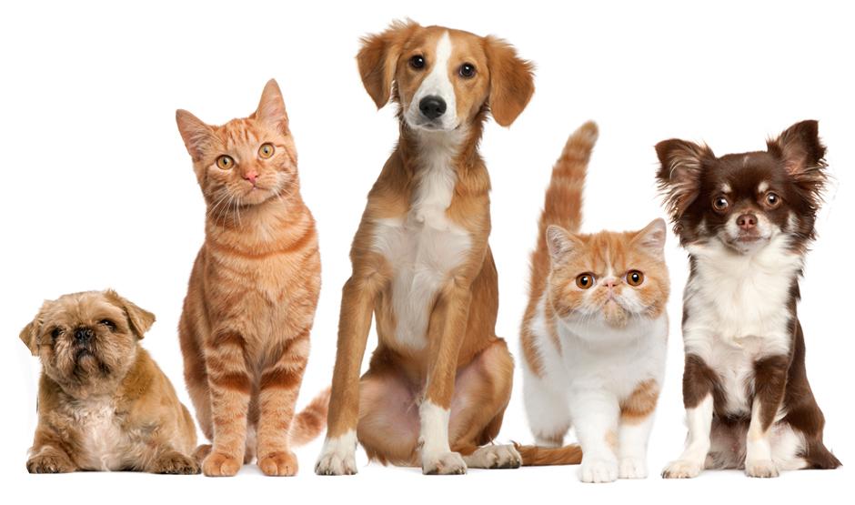 Produse Pet Shop de calitate pe platforma PetsMania