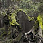 Afla totul despre Padurea Baciu chiar acum! Lucruri inspaimantatoare se…