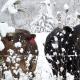 vaci iarna