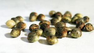 seminte cannabis