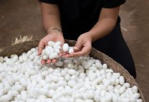 Cea mai rezistenta fibra naturala din lume: matasea