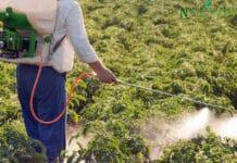 produse fitosanitare nu oricum